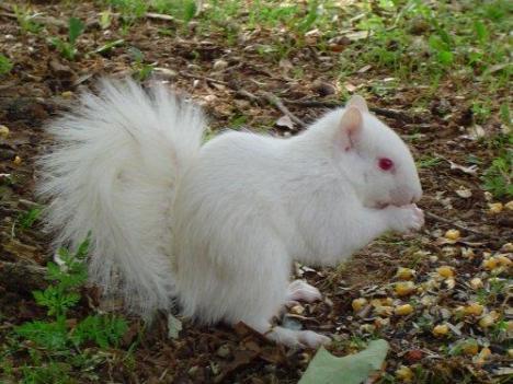 albino08